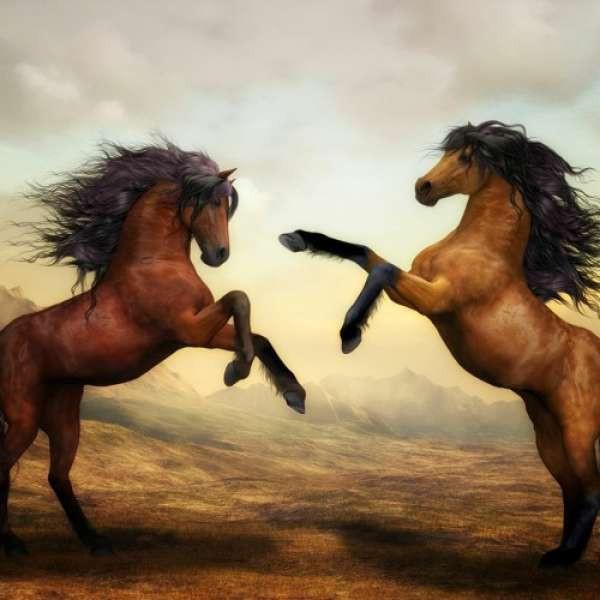 Savfk - All The King's Horses