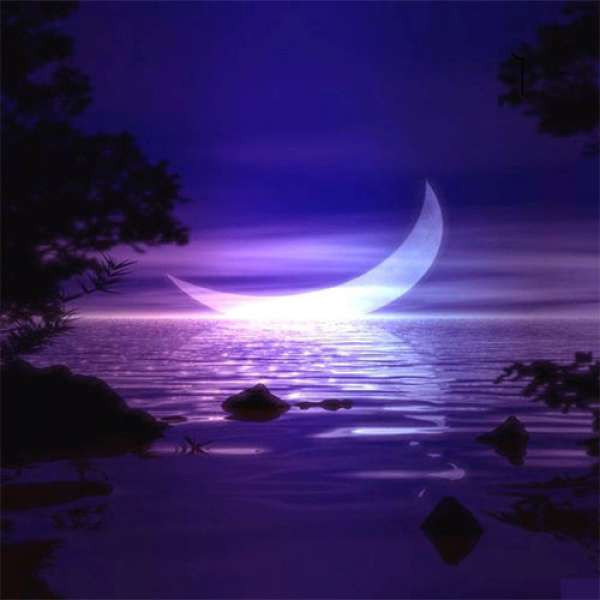 Purrple Cat - Crescent Moon