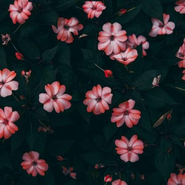 Enlia - The Flower Tempest